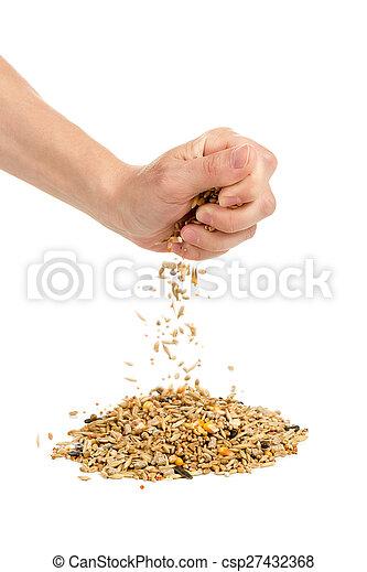 Human hand pours grain - csp27432368