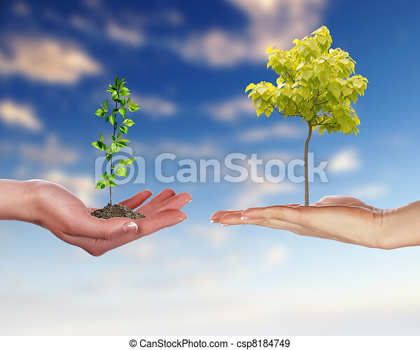 Human hands and green plant - csp8184749