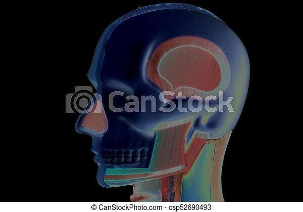Human Head Anatomy Model On Black