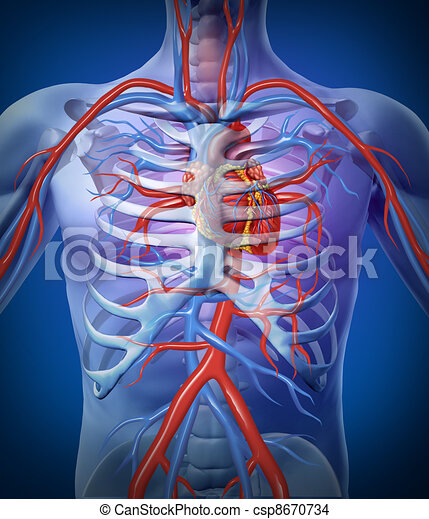 Human Heart Circulation In a Skeleton - csp8670734