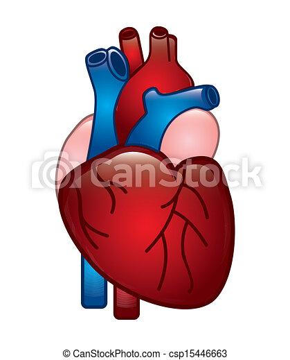 Human Heart Design Over White Background Vector Illustration Clip