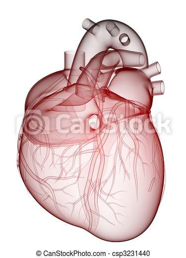 human heart - csp3231440