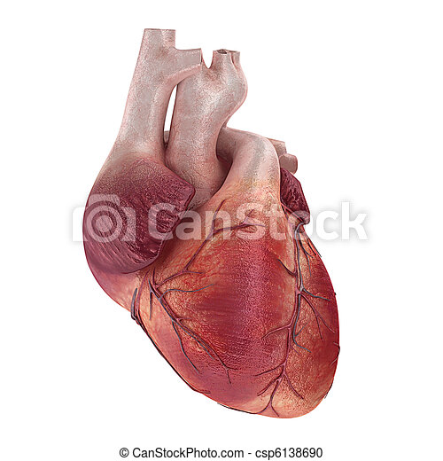 3d Rendered Medical Illustration Of A Human Heart Stock Illustration