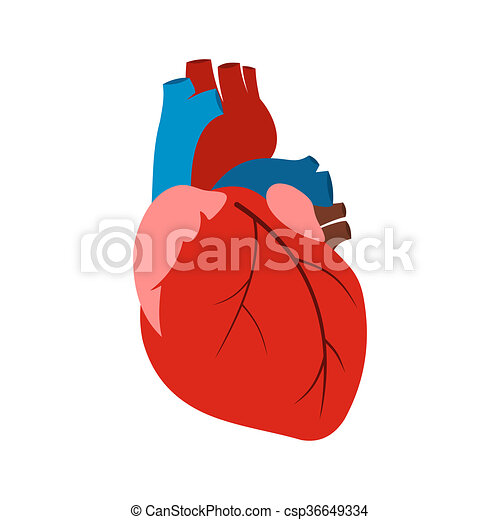 human heart icon in flat style isolated on white background rh canstockphoto com human heart cartoon images human heart cartoon pic