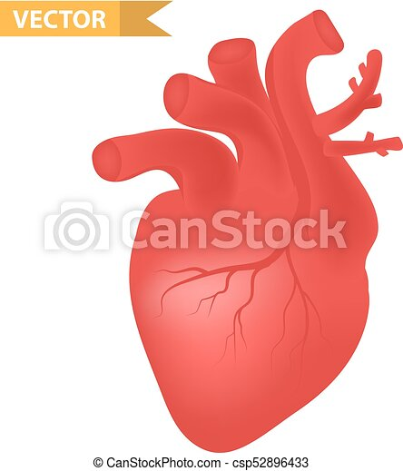 Human heart icon, realistic 3d style  Internal organs symbol  Anatomy,  cardiology, concept  Isolated on white background  Vector illustration