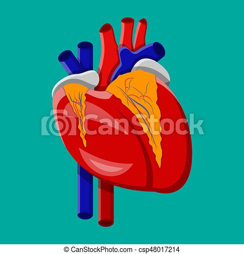 Human heart internal organ vector illustration in flat vector human heart internal organ vector illustration in flat vector clip art search illustration drawings and eps graphics images csp48017214 ccuart Gallery