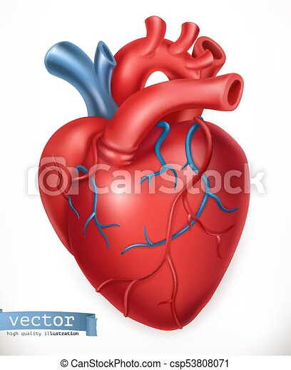 Human heart medicine internal organs 3d vector icon vectors human heart medicine internal organs 3d vector icon ccuart Gallery