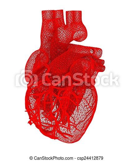Human heart - csp24412879