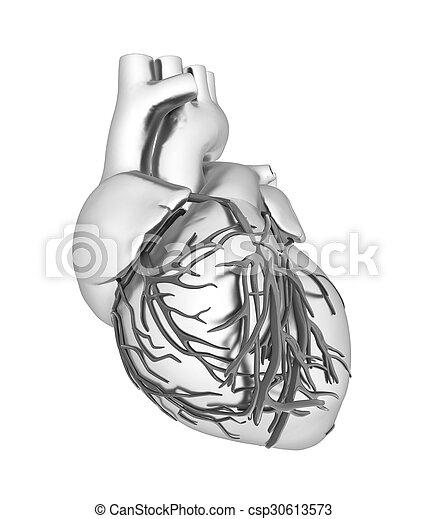 Human heart - csp30613573