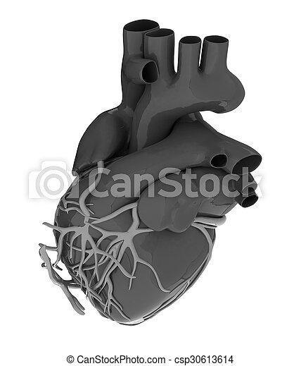 Human heart - csp30613614