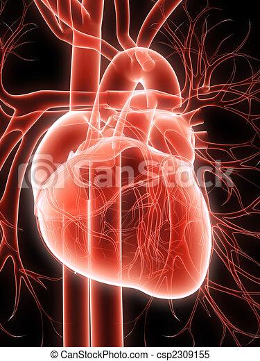 human heart - csp2309155