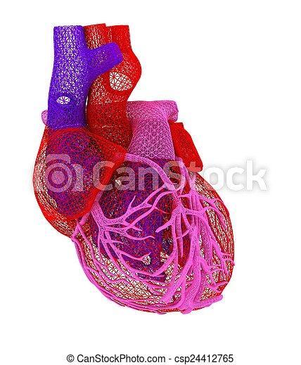 Human heart - csp24412765