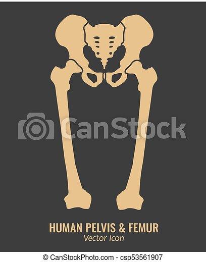 Clip Art of Human hip bone, artwork u91142932 - Search Clipart ...