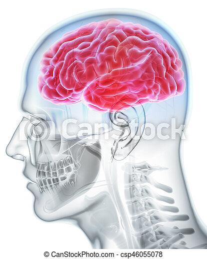 Human Internal Organic - Brain. - csp46055078