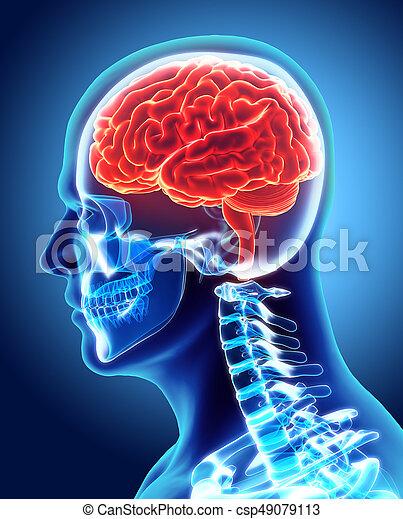 Human Internal Organic - Brain. - csp49079113