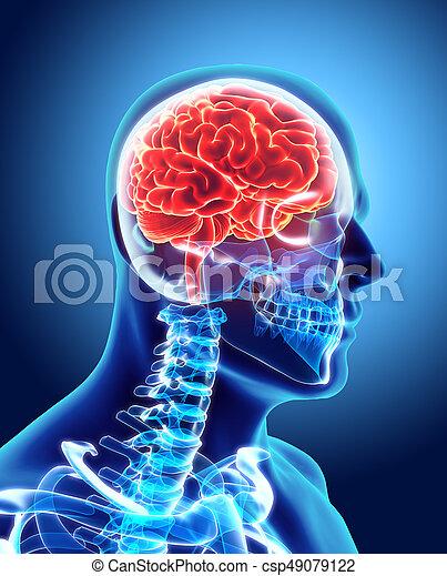 Human Internal Organic - Brain. - csp49079122