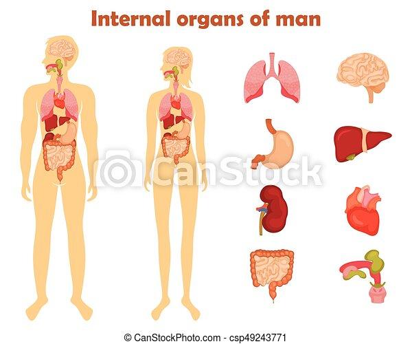 Human internal organs icon set. vector illustration in cartoon style ...