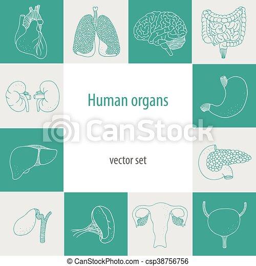 Human internal vector set - csp38756756