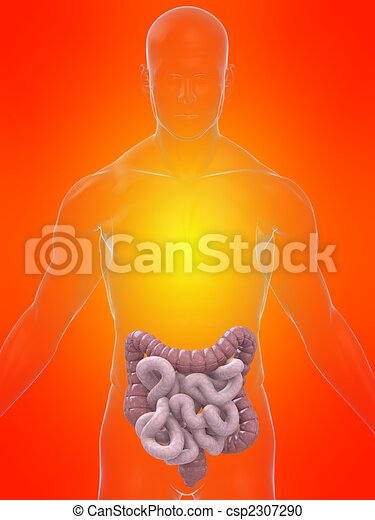 Human intestines. 3d rendered illustration of a transparent body ...