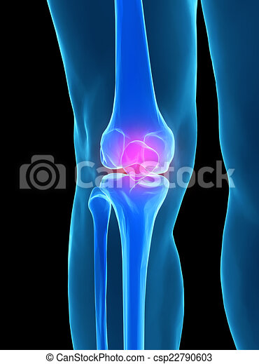 Human Knee Anatomy With Femur Tibia And Fibula Bones Under Stock
