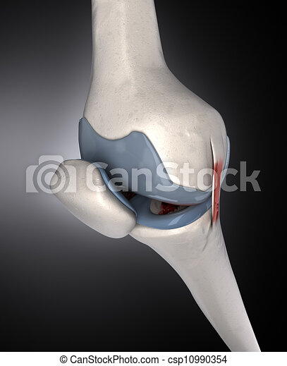 Human knee anatomy - csp10990354