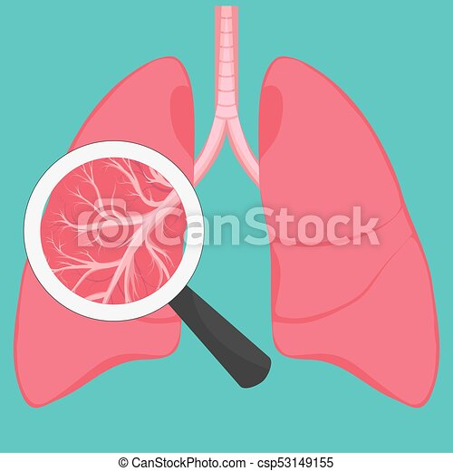 Human Lung Anatomy Diagram Human Lungs With Magnifying Glass