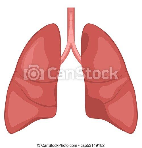 Human Lung Anatomy Diagram Illness Respiratory Cancer Graphics Vector
