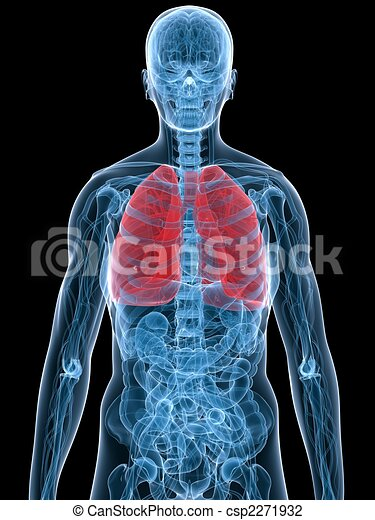 Human Lung 3d Rendered Illustration Of Human Anatomy With
