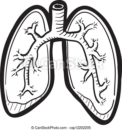 Human lung sketch - csp12202205