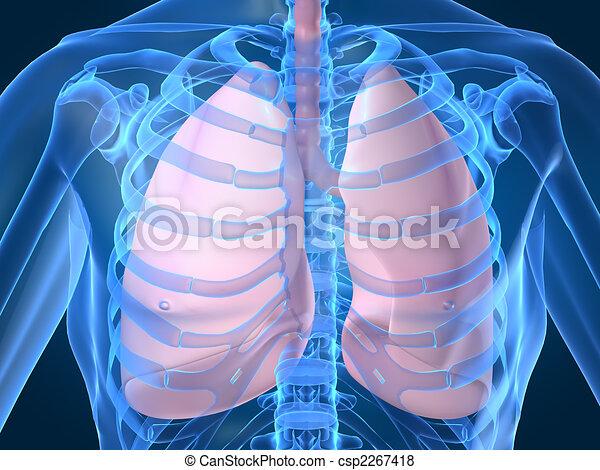 human lung - csp2267418