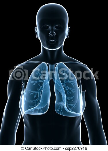 Lungs images and stock photos 29420 lungs photography and royalty human lung 3d rendered illustration of a human body shape ccuart Image collections