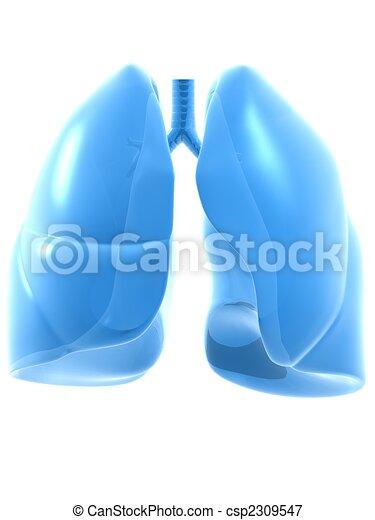 human lung - csp2309547