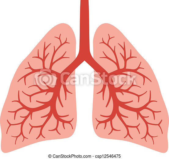Human Lungs Bronchial System Human Lungs Bronchial Vectors