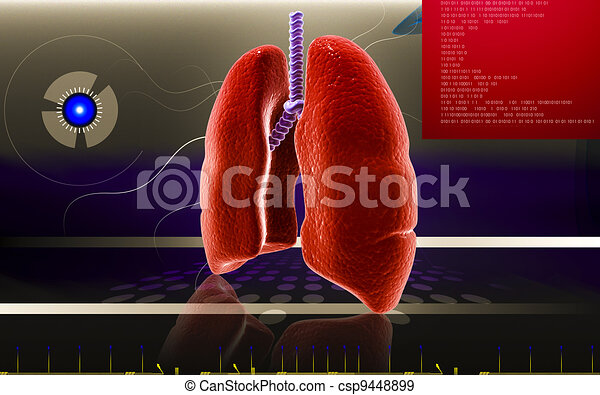 Human lungs  - csp9448899