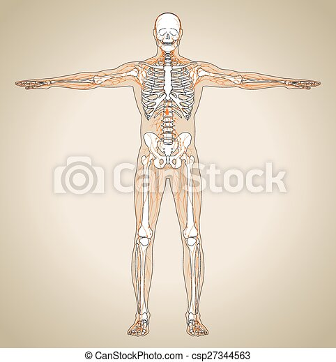 Human (male) lymphatic system - csp27344563