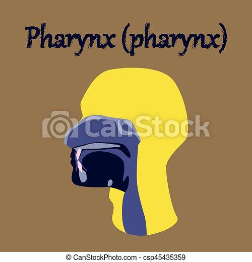 human organ icon in flat style pharynx - csp45435359