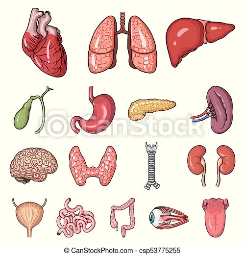 Human organs cartoon icons in set collection for design. anatomy and ...