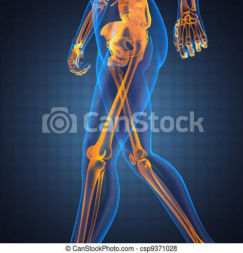 human radiography scan - csp9371028