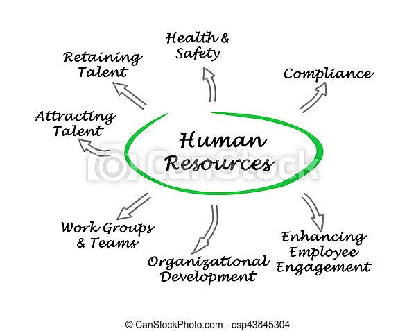 Human Resources - csp43845304