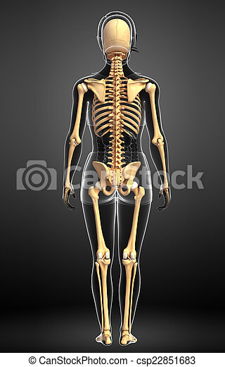 Human skeleton back view illustration of human skeleton back view human skeleton back view csp22851683 ccuart Image collections
