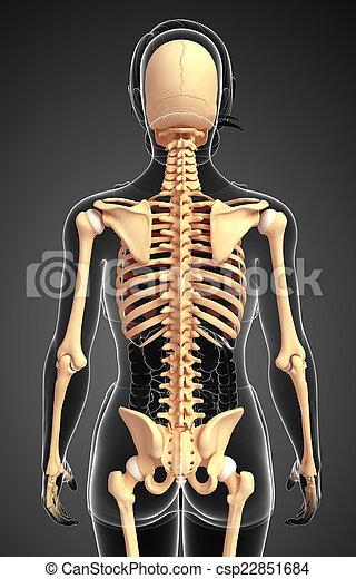 Human skeleton back view. Illustration of human skeleton back view.