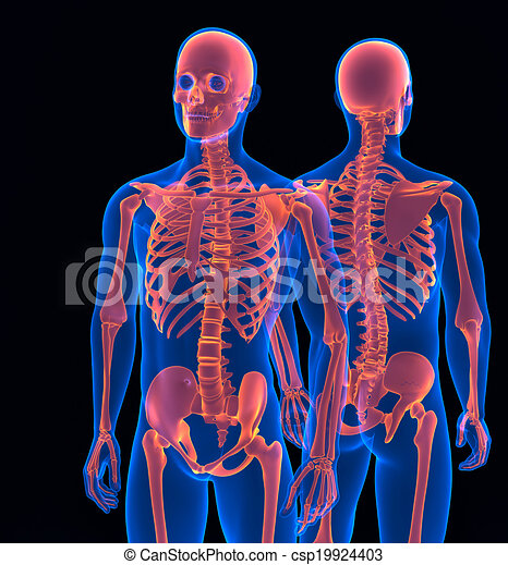 Human skeleton close up front and back view contains clipping path human skeleton close up front and back view contains clipping path ccuart Image collections