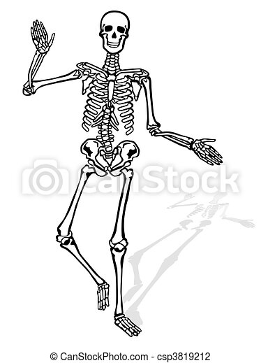 Human Skeleton Front Vector Illustration Search Clipart Drawings