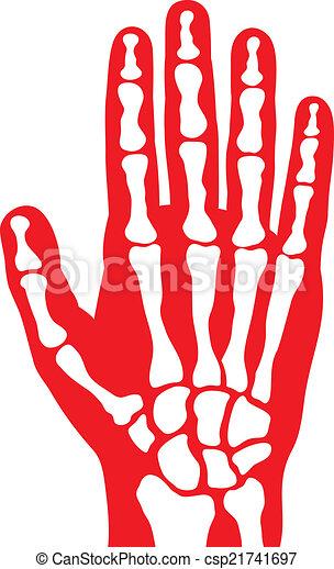 Human skeleton hand vector human hand bones human skeleton hand csp21741697 ccuart Images