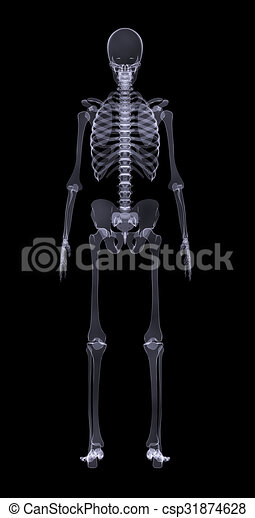 Human skeleton on black rear view human skeleton standing on black human skeleton on black rear view csp31874628 ccuart