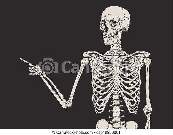 Human skeleton posing vector