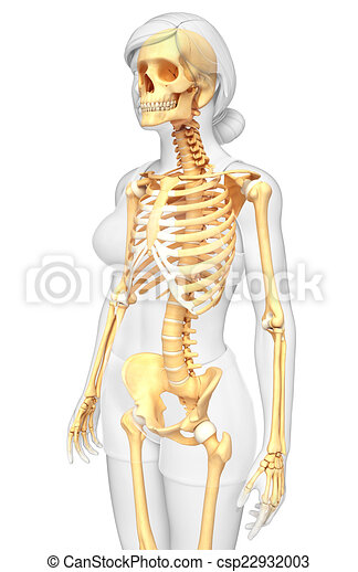 Human skeleton side view. Illustration of human skeleton side view.