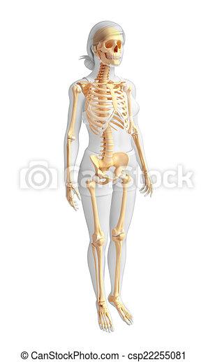 Human Skeleton Side View Illustration Of Human Skeleton Side View