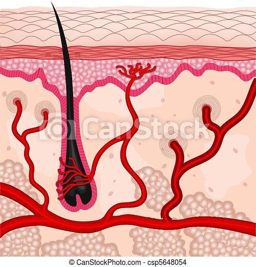 human skin cells - csp5648054