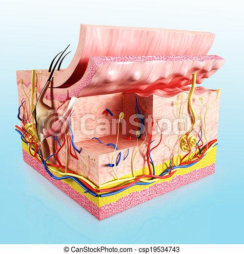 3d Rendered Illustration Of Human Skin Layer Anatomy